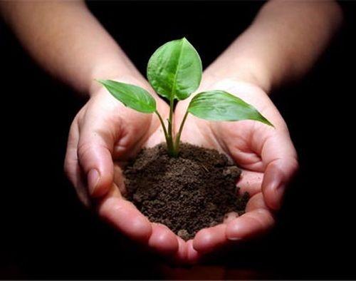 肥殇:施肥像给土壤吸毒