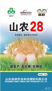 供应小麦种子鑫秋山农28粮食作物种子大田作物种子
