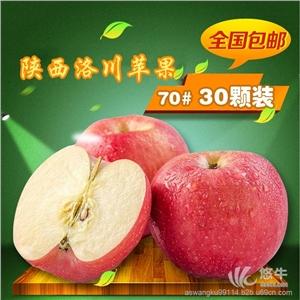 供应太苹盛事红遍中国陕西洛川苹果采购新鲜70mm水果价格优惠