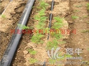 供应遵化防老化蔬菜滴灌设备--专业技术生产PE滴水带