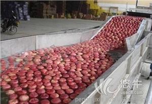 供应柑橘水果多功能清洗机