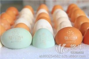 代理加盟孕婴专属鸡蛋,绿色纯天然散养,诚招代理!