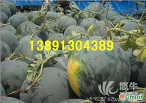 供应生鲜水果陕西大棚黑无籽西瓜产地批发大量上市