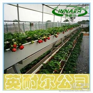 供应农业新型草莓立体种植槽 草莓基质栽培槽农业新型草莓种植槽