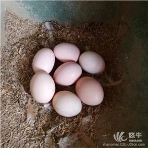 供应善圆满善圆满土鸡蛋,土鸡等